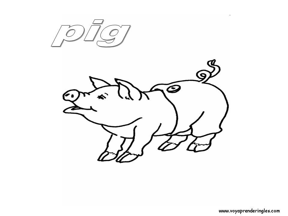 Pig Animals Dibujos Animales Colorear En Ingles