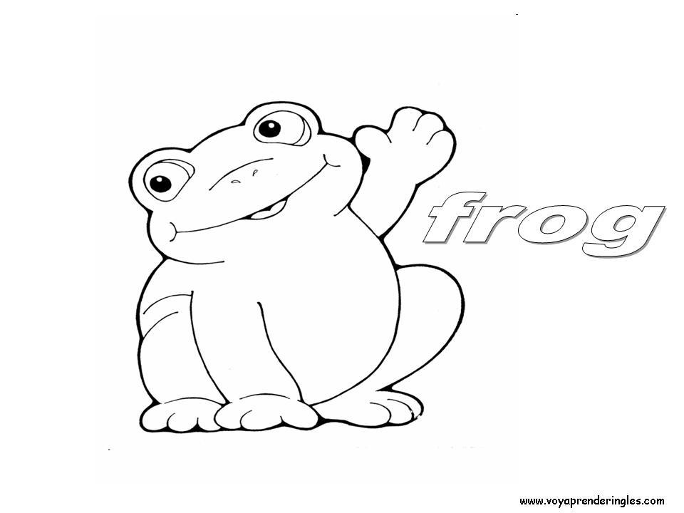 Frog Animals Dibujos Animales Colorear En Ingles