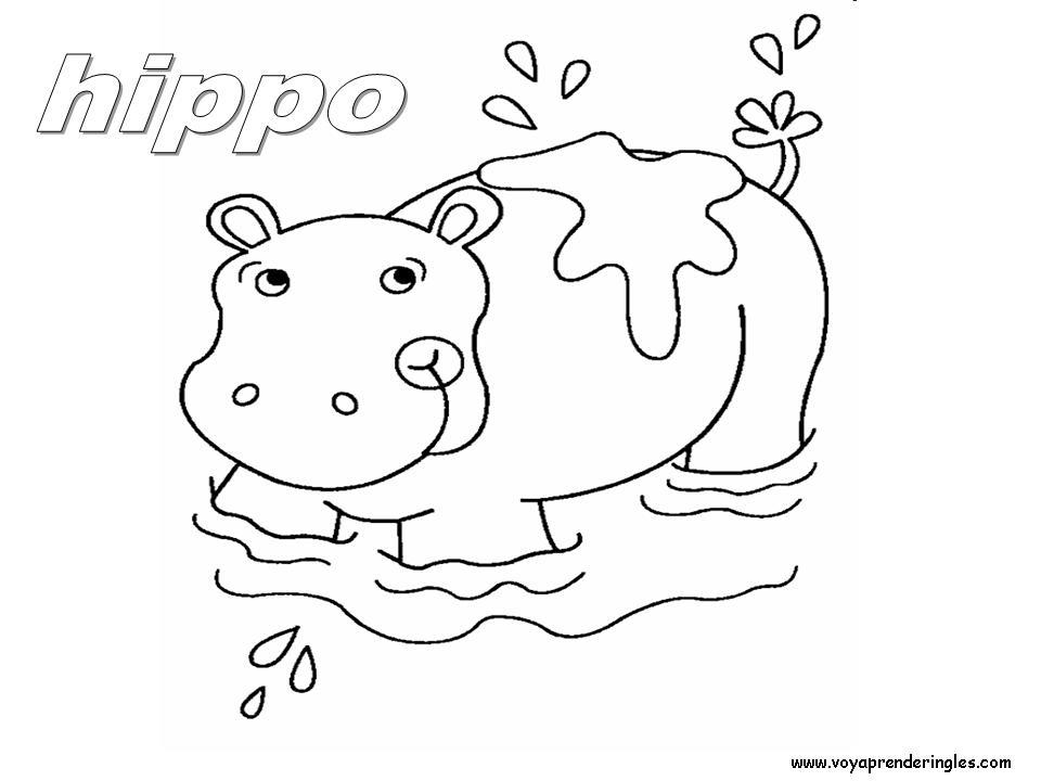 Hippo - Animals - Dibujos Animales Colorear en Inglés