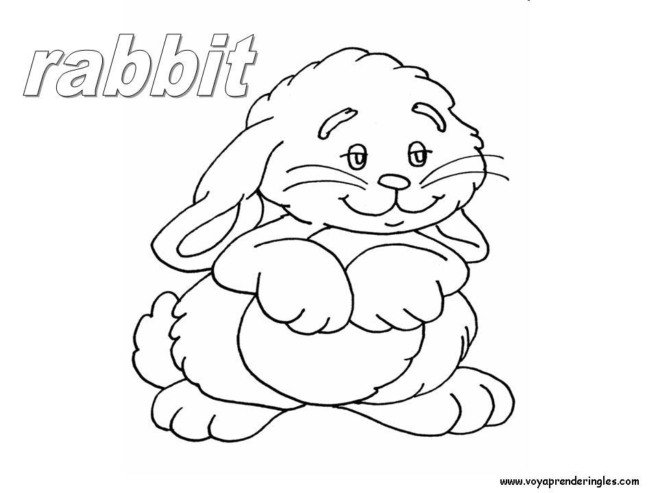 Rabbit Animals Dibujos Animales Colorear En Inglés