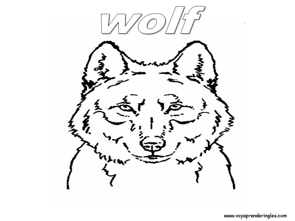 Wolf Animals Dibujos Animales Colorear En Ingles