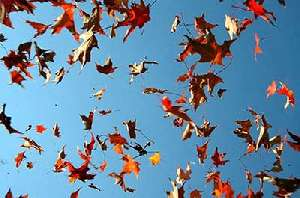 Autumn Leaves are a-falling - Canciones para Niños en Inglés