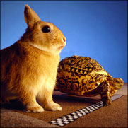 The Hare and the Tortoise - La Liebre y la Tortuga